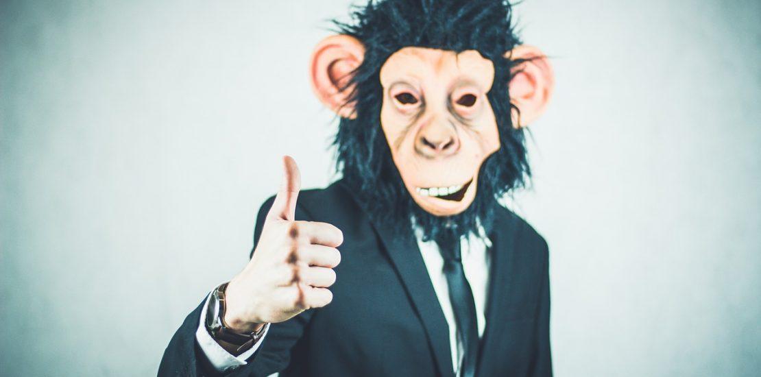monkey-2710660_1280